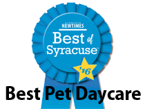 Best of Syracuse - Best Pet Daycare 2016